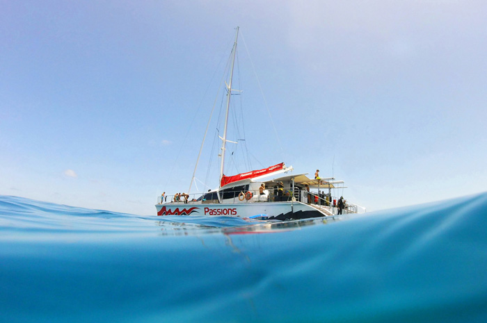 feature image for Cairns Great Barrier Reef tours